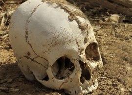 DesertSkull2