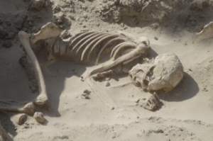 Desert Skull3